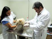 Prefeitura de São Manuel (SP) resgata cachorro com suspeita de maus-tratos
