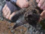 Filhote de gato sobrevive após ser enterrado vivo