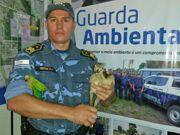 Animais vítimas de queimadas são resgatados em Palmas, TO
