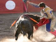 Decisão histórica: União Européia vota contra incentivo à criação de touros para touradas