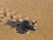 Homem tenta passar fronteira com mais de 50 tartarugas