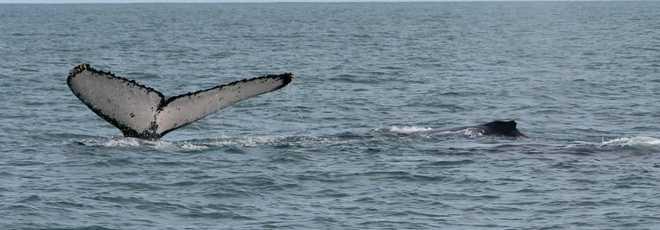 CIENCIA baleias e-6b65fe217311 thumb d
