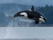 CIENCIA orca 3e65de6 thumb