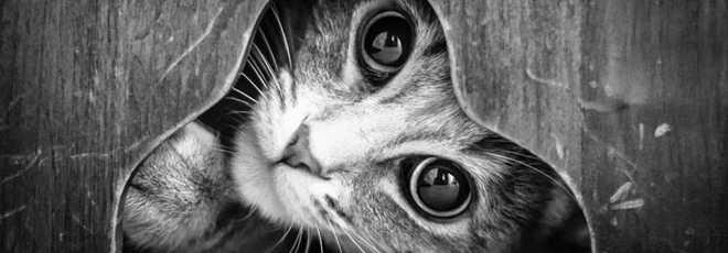 GALERIA gatos cat-25 thumb d