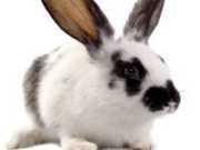 INDIA testes-animais thumb