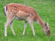 SUICA 1414074027772 wps 50 A SWISS wildlife park has thumb