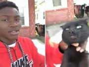 US gato estragulado1411 thumb
