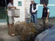 Polícia prende homens por tráfico de animais silvestres em Arapiraca