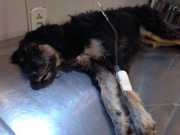 Animais morrem por envenenamento no Village Campestre II, em Maceió