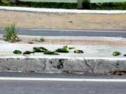 Polícia do AM vai investigar morte de pássaros encontrados em avenida