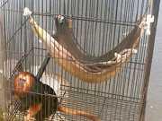 Denúncias contra zoo de Salvador revelam descuidos e maus-tratos