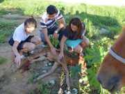 Vídeos: Após atropelamento, Prefeitura abandona animal em Vitória da Conquista, BA
