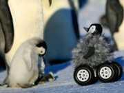 Robô pinguim ajuda cientistas a chegar mais perto dos animais