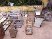 Polícia Ambiental do DF apreende 30 pássaros silvestres em Ceilândia