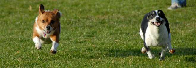 Cruzeiro (DF) ganhará parque para cães e gatos