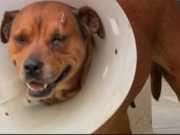 Cadela é agredida no DF após tentar entrar na casa de vizinho
