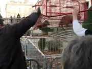 Protesto de agricultores com tortura de animais choca franceses