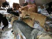 Ambientalistas resgatam cães abandonados dentro de hoteizinhos em BH e Esmeraldas, MG