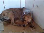 Protetores denunciam maus-tratos de animais em Congonhas, MG