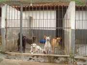 Conselho de Proteção aos Animais é debatido em Juiz de Fora, MG