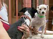 Número de cães com leishmaniose preocupa autoridades em Lavras, MG