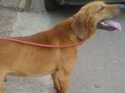 Idoso é preso por maus-tratos, após arrastar cachorro amarrado a carro em MG