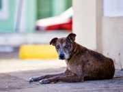 Cerca de 1.500 cães e gatos foram abandonados só esse mês em Teresina