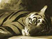Portugal: Funchal não autoriza circos com animais