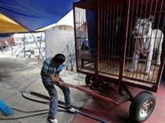 Portugal: Assembleia Municipal de Lisboa aprova recomendação contra circos com animais