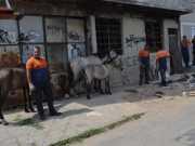 Cavalos abandonados e maltratados são apreendidos em Mesquita, RJ
