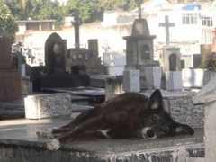 Lei pode permitir que animais sejam enterrados com seus tutores em cemitérios de Niterói, RJ