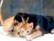Serviço castramóvel abre cadastro de cães e gatos em Petrópolis, no RJ
