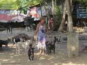 Abrigo com 130 cães na Zona Oeste do Rio passa por dificuldade