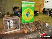 Polícia Ambiental apreende mais de cem pássaros silvestres em RO