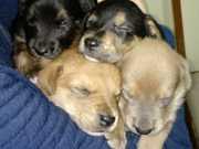 Cães socorridos de maus-tratos na área rural de Bento Gonçalves, RS
