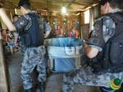 Brigada Militar estoura rinha de galo em Passo Fundo, RS