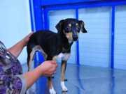 Cão adotado sofre maus-tratos e é resgatado pela Polícia em Porto Alegre