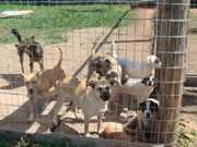 Proteção e controle populacional de animais serão temas de audiência na Câmara de Santo Ângelo, RS