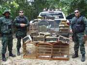 Quase 120 aves silvestres são apreendidas em duas feiras livres em Aracaju