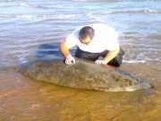 PF investiga morte de peixe-boi na praia de Atalaia Nova, em SE