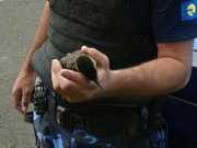 Polícia Ambiental de Botucatu (SP) resgata vários animais silvestres