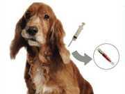 Prefeitura de Bragança (SP) realiza a microchipagem de cães do Canil Municipal