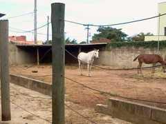 Veterinários vão atender animais nas ruas de Campinas, SP