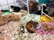 Após morte de 17 cães e gatos em enchente, 270 esperam por novo lar