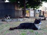 Cemitério em Piracicaba (SP) tem mais 5 mortes de gatos e recebe câmeras