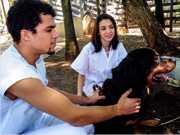 Hospital Veterinário oferece tratamento para cães com doença degenerativa