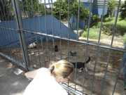 Protetores pedem ajuda para resgatar gatos em Sorocaba, SP