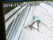 Câmera flagra homem suspeito de dar comida com veneno a cães; veja