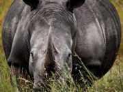 Exposição fotográfica em SP: 'A Jornada do Rinoceronte'