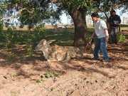 PM Ambiental aplica multa de R$ 12 mil por maus-tratos contra animais em Irapuru, SP